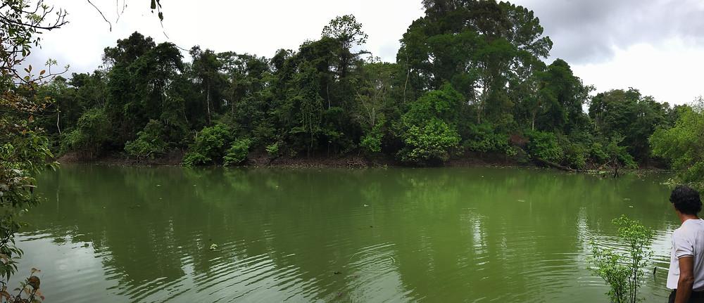 rivières en amazonie