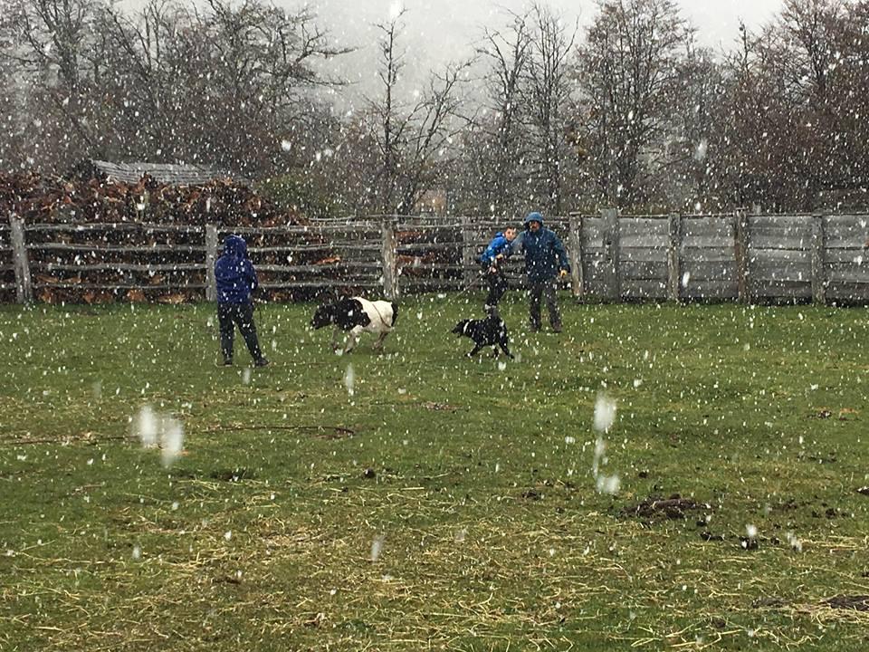 au champs sous la neige