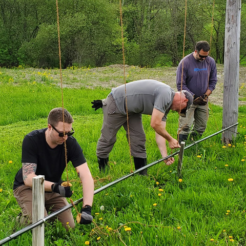 Three men working in hops field