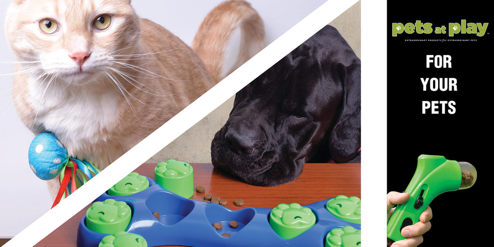 Pets At Play Image for Website.jpg