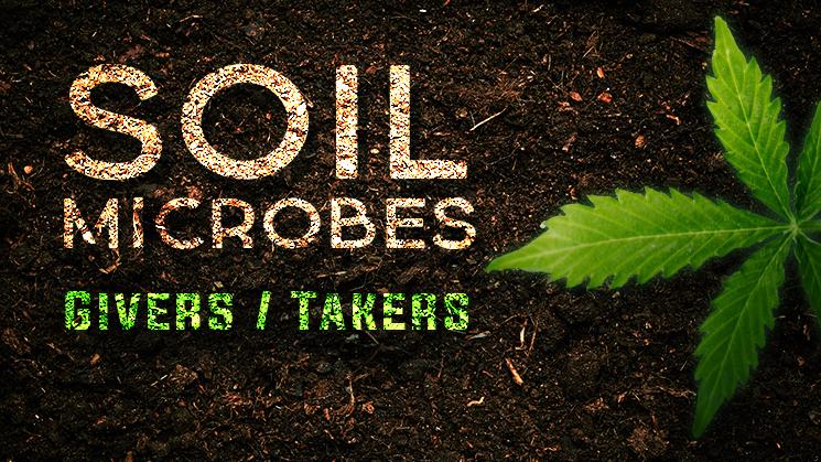 Soil Microbes Program image