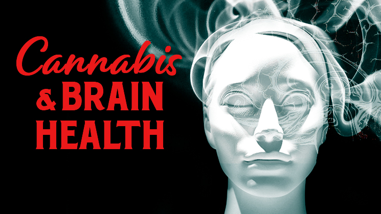 Cannabis Brain Health Program image