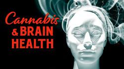 Cannabis Brain Health Program image