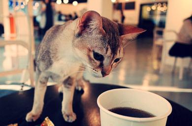 Kedi Sever Cafe