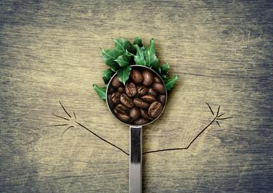 Kahve Ve Antioksidan Etkisi