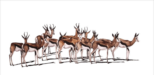 Springbuck Herd, by Andre Peypers