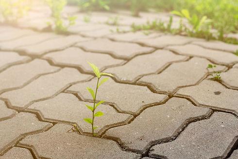 seedling-in-footpath.jpg