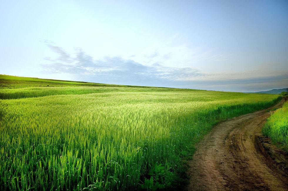 Rural Landscape.jpg