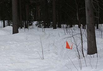 Orienteering_in_the_snow_IMG_3436_C.JPG