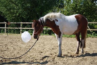 Grondwerk paarden