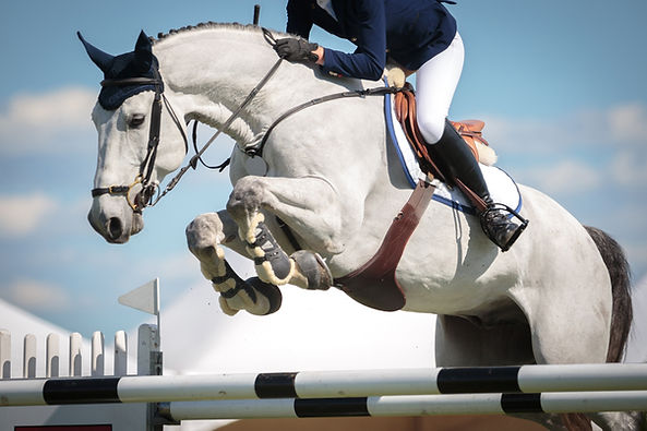 Improve Your Show Jumping