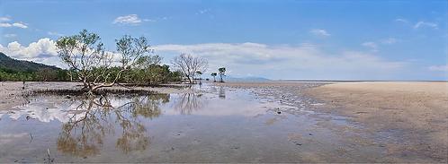 Mangroves, Queensland, AUS.
