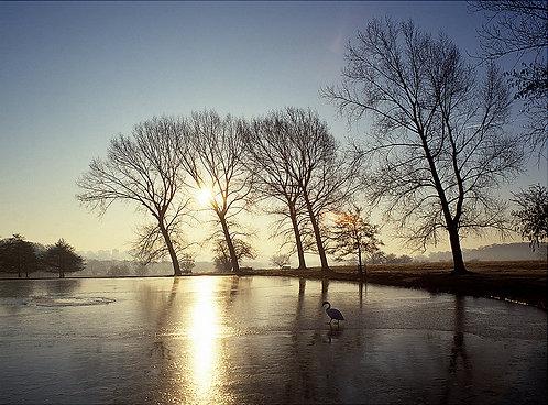 Richmond Park, London, UK