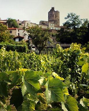 yvan-bernard-vigneron-montpeyroux_394263