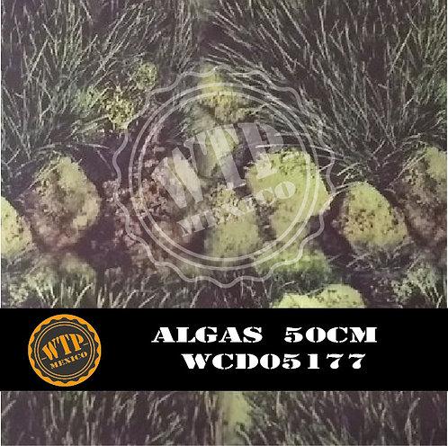 ALGAS 50 CM