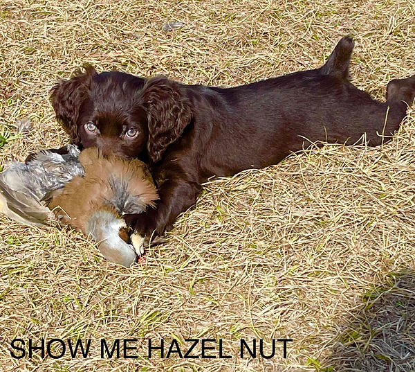 Hazel1.jpg