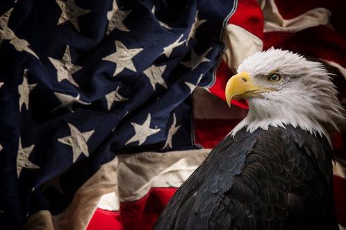 American Eagle Adhesive Vinyl