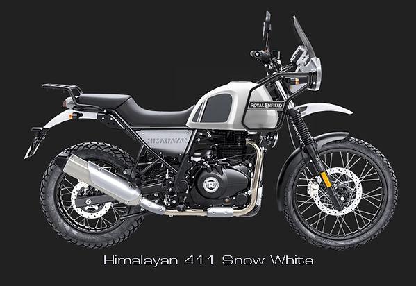 Himalayan 411 Snow White.jpg