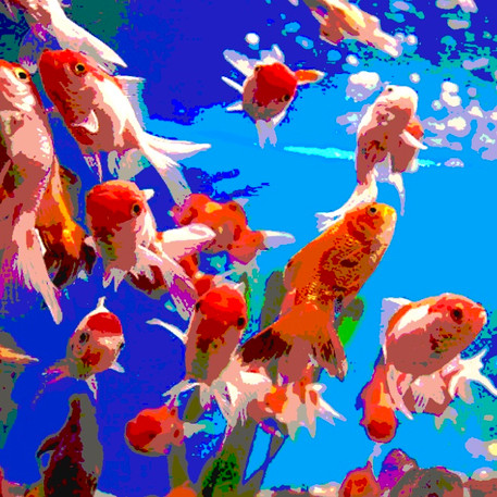 Red fish 4 - 90x90 - 90 €