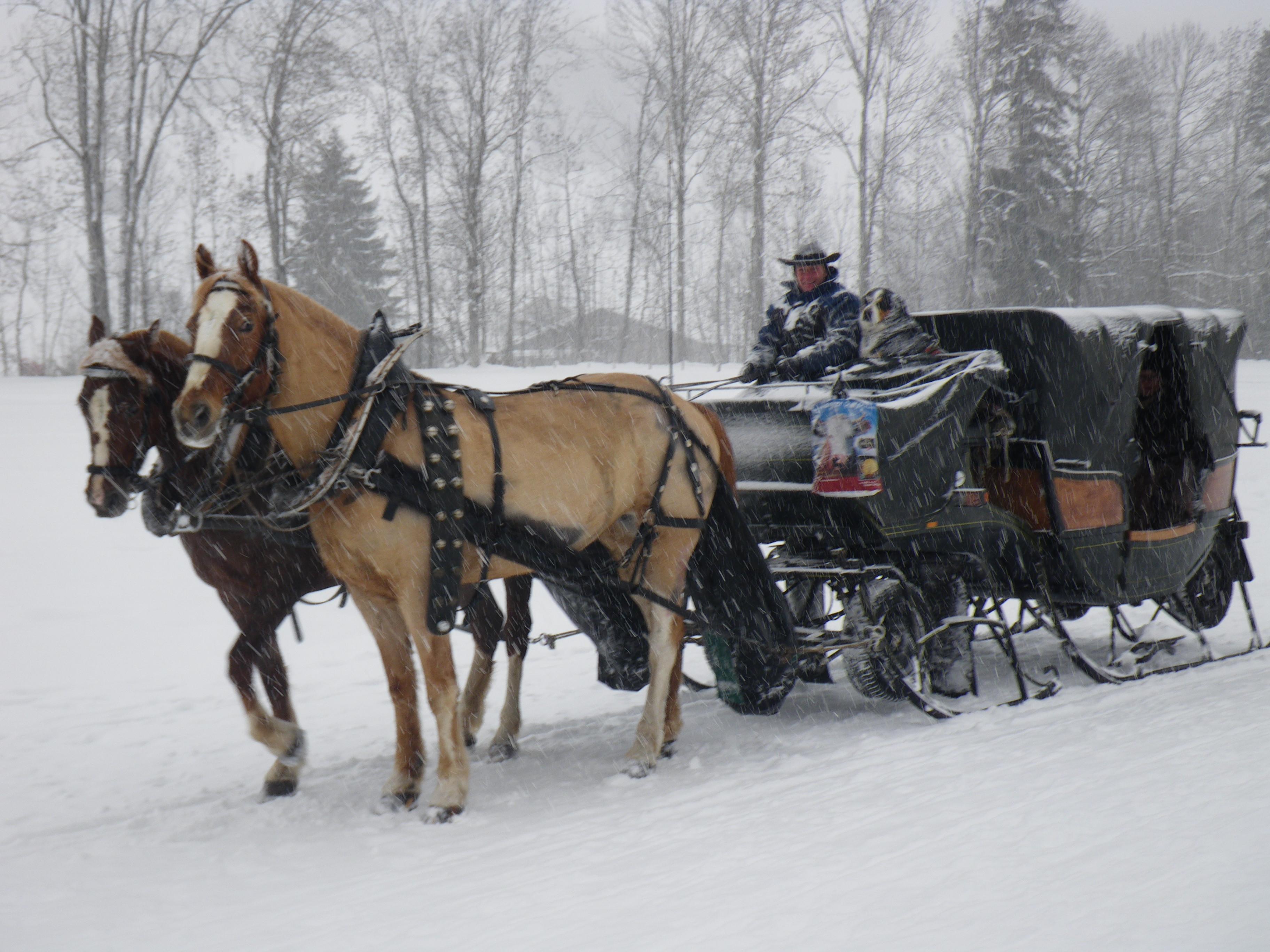 vongrünigen_winter13_264.JPG