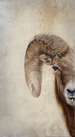"piel de cabra 4 / goat skin 4 / óleo sobre piel animal / oil on animal skin/ 72cm x 45cm/ 29 1/2""x16 1/8"""