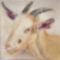 Goat Skin III.jpg