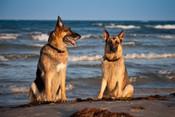 beach dogs!-1-Edit.jpg