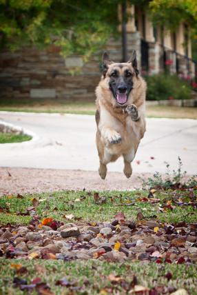 jumping dog-2.jpg