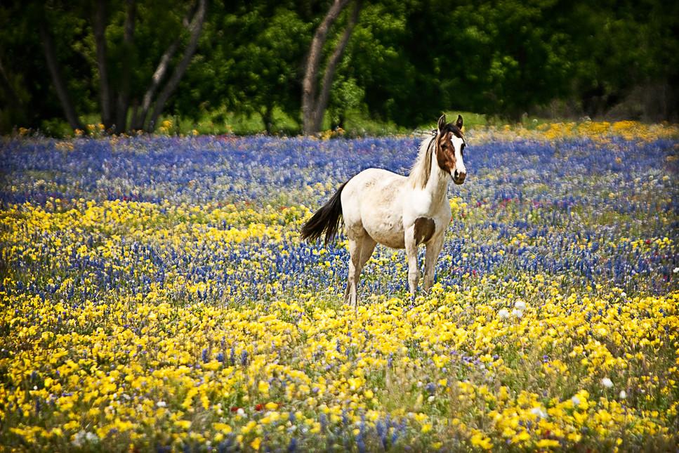 pony in flowers.jpg