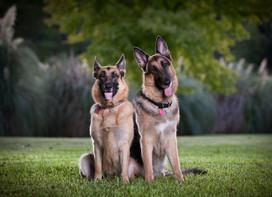 Bella and Tucker-5.jpg