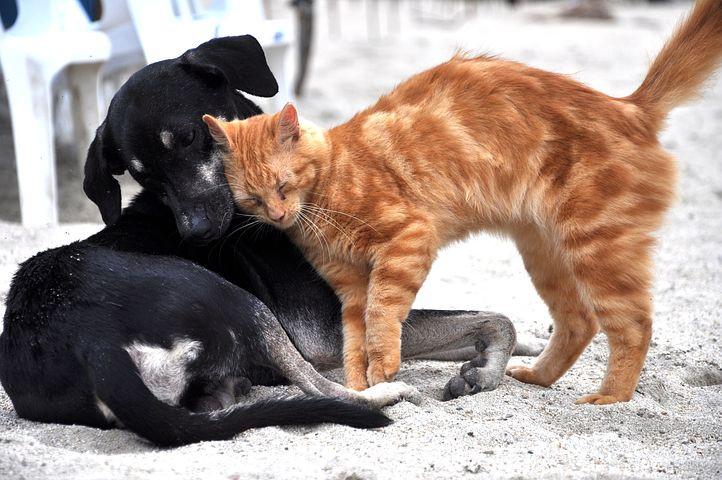 Hund, katt, tillsammans, keliga, kärlek