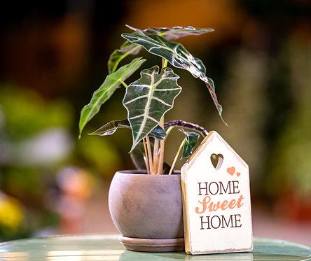 מתנה לבית חדש