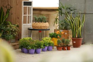 משתלה באשקלון צמחי בית