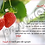 Thumbnail: מארז בהשראת האריה שאהב תות