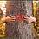 Thumbnail: מארז בהשראת העץ הנדיב