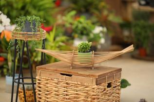 עיצוב הבית צמחים.JPG