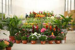משתלת בלבן צמחי בית