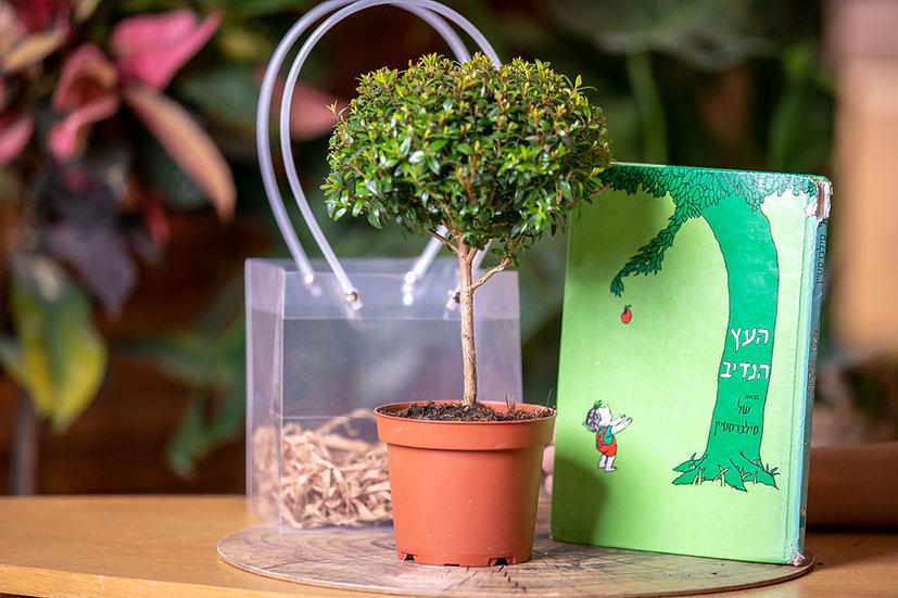 מארז בהשראת העץ הנדיב