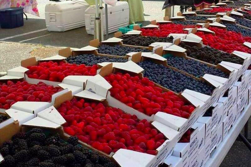 Lots of Sidhu Berries!