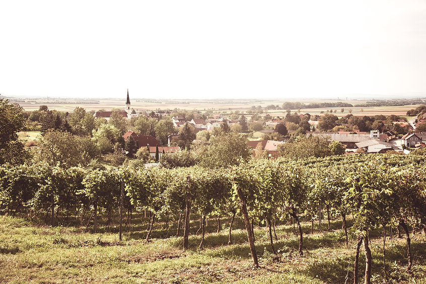 chardonnay-syrah-ölberg-weinviertel-niederrussbach