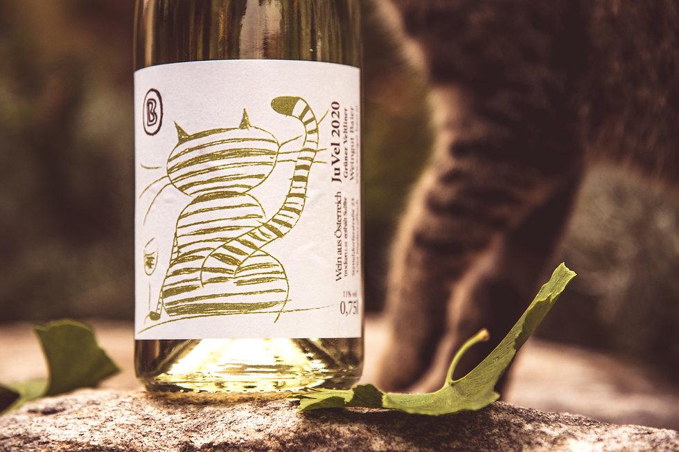 jungwein-gruener veltliner-katze-franz xaver rathauscher