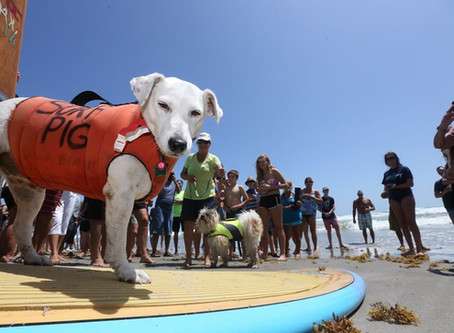 56th Annual Easter Surf Contest featuring the 7th Annual East Coast Dog Surfing Championships