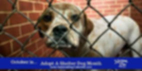 Adopt a Dog Month 2019.jpg