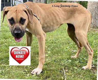 Journey donate link.jpg