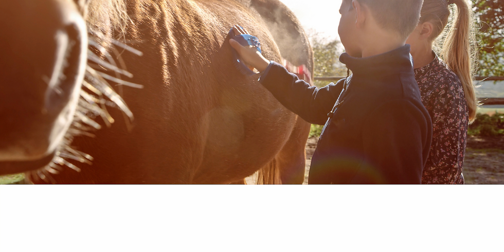 Social and Life Skills Equine Assisted Learning Workshop -9 to 12yo