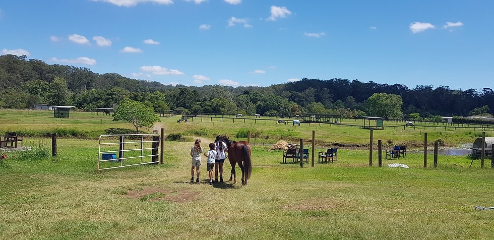 Equine Therapy with kids