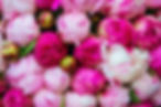 pink-peonies-wallpaper.jpg