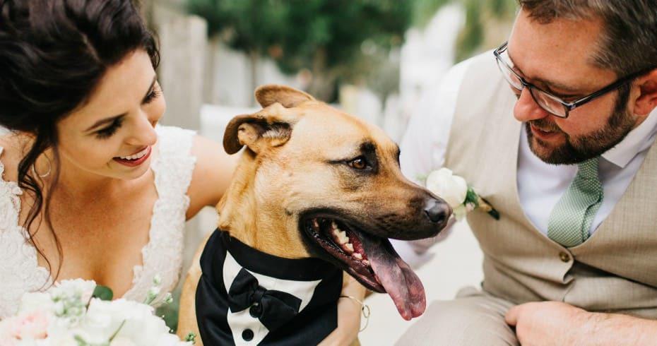 Собаки На Вашей Свадьбе