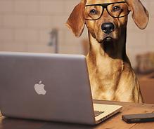 computer dog.png