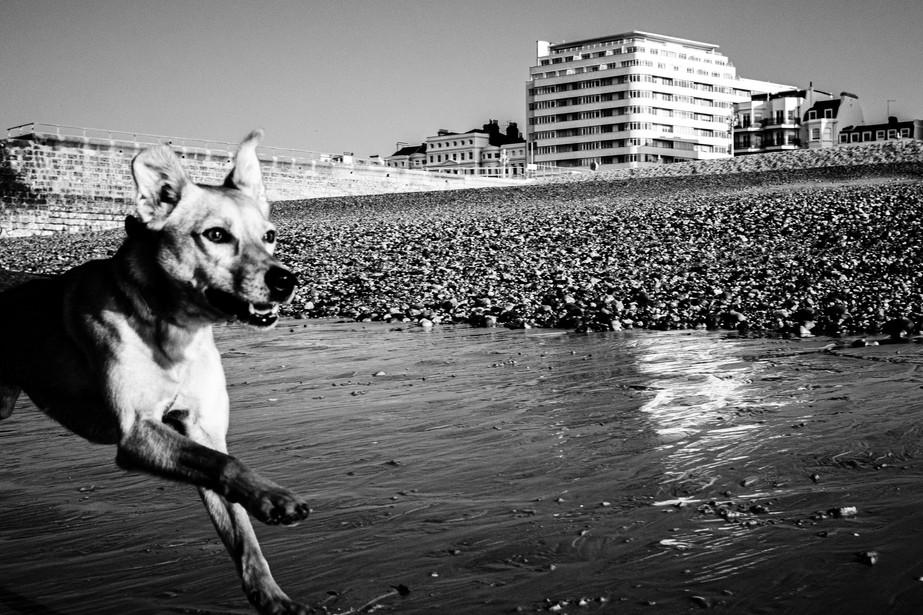 Low tide trott